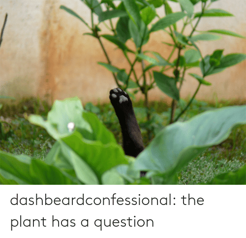 question: dashbeardconfessional:  the plant has a question