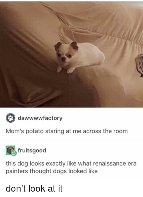 Dogs, Memes, and Moms: dawwwwfactory  Mom's potato staring at me across the room  fruitsgood  this dog looks exactly like what renaissance era  painters thought dogs looked like don't look at it