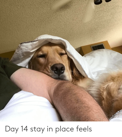 Stay In: Day 14 stay in place feels