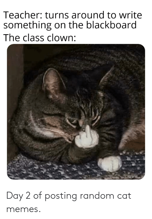 cat: Day 2 of posting random cat memes.