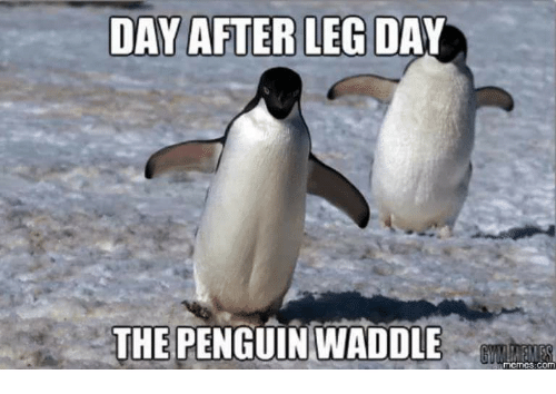 Day After Leg Day: DAY AFTER LEG DAY  THE PENGUIN WADDLE  mcmC3 com
