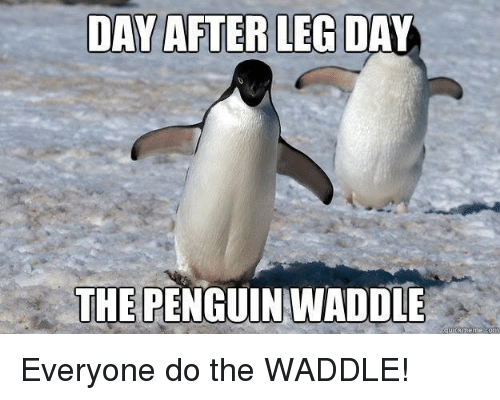 Leg,  Legs, and Legs-Day: DAY AFTER LEG DAY  THE PENGUIN WADDLE  uickmenne como Everyone do the WADDLE!
