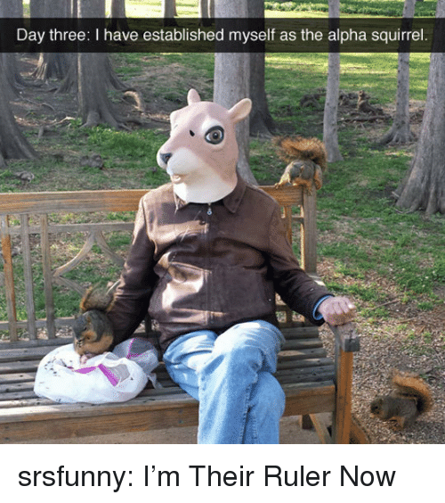 Tumblr, Blog, and Http: Day three: I have established myself as the alpha squirrel srsfunny:  I'm Their Ruler Now