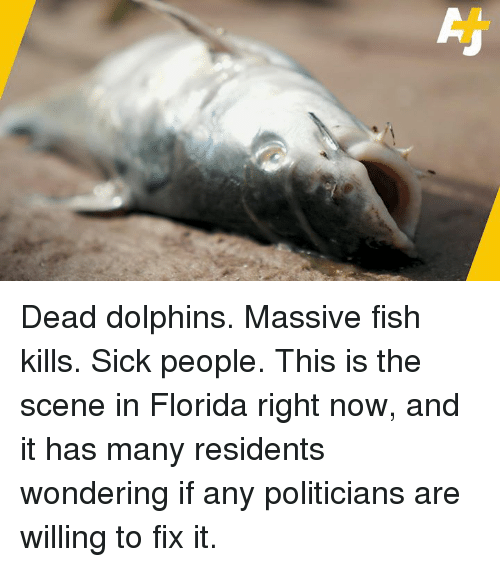 Memes, Dolphins, and Fish: Dead dolphins. Massive fish kills. Sick people. This is the scene in Florida right now, and it has many residents wondering if any politicians are willing to fix it.