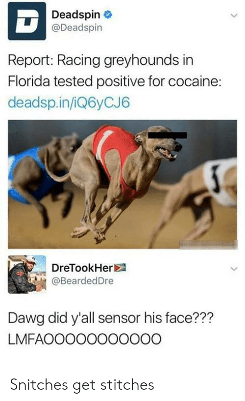 Stitches, Cocaine, and Florida: Deadspin  @Deadspin  Report: Racing greyhounds in  Florida tested positive for cocaine:  deadsp.in/iQ6yCJ6  DreTookHer  @BeardedDre  Dawg did y'all sensor his face???  LMFAOoo0ooooo00 Snitches get stitches