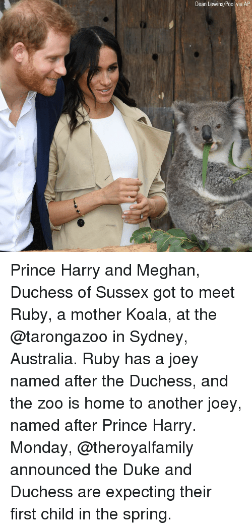 koala: Dean Lewins/Pool via AP Prince Harry and Meghan, Duchess of Sussex got to meet Ruby, a mother Koala, at the @tarongazoo in Sydney, Australia. Ruby has a joey named after the Duchess, and the zoo is home to another joey, named after Prince Harry. Monday, @theroyalfamily announced the Duke and Duchess are expecting their first child in the spring.