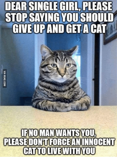 girl please: DEAR SINGLE GIRL PLEASE  STOP SAYING YOUSHOULD  GIVE UP AND GET A CAT  IF NO MAN WANTS YOU,  PLEASE DONT FORCEANINNOCENT  CATTO LIVE WITH MOU