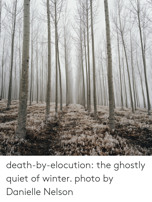 Tumblr, Winter, and Blog: death-by-elocution: the ghostly quiet of winter. photo by Danielle Nelson