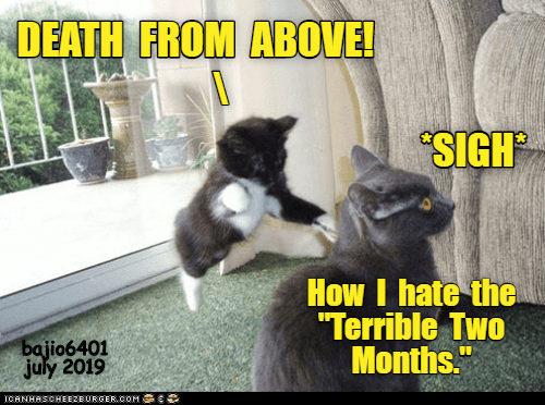 "Death, How, and July: DEATH FROM ABOVE!  SIGH  How I hate the  ""Terrible Two  Months.""  bajio6401  july 2019  ICANHASCHEEZBURGER.OOM C"