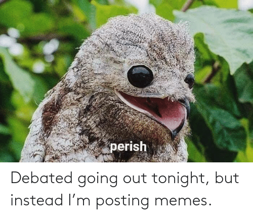 instead: Debated going out tonight, but instead I'm posting memes.