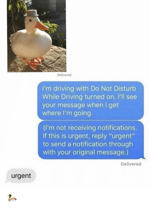 "Driving, Memes, and 🤖: Delivered  I'm driving with Do Not Disturb  While Driving turned on. I'll see  your message when I get  where I'm going.  (I'm not receiving notifications.  If this is urgent, reply ""urgent""  to send a notification through  with your original message.)  Delivered  urgent 🦆"