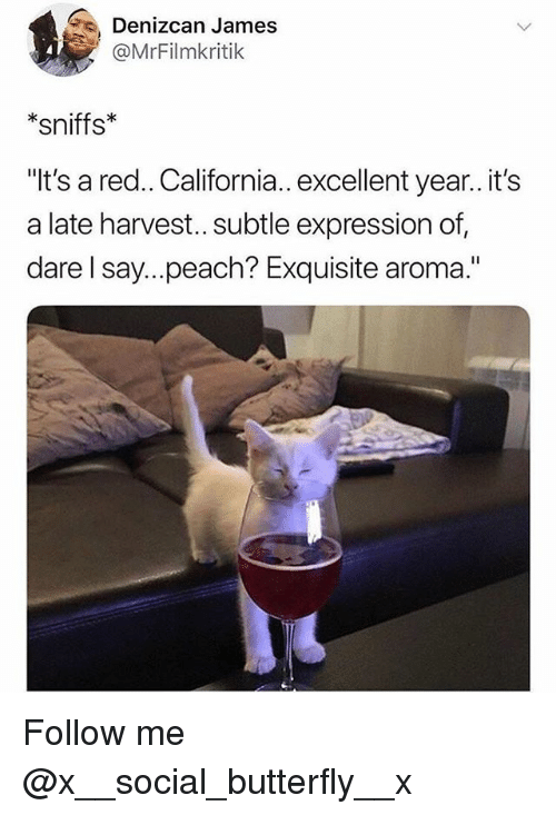 """Memes, Butterfly, and California: Denizcan James  @MrFilmkritik  *sniffs*  """"It's a red.. California.. excellent year.. it's  a late harvest.. subtle expression of,  dare l say...peach? Exquisite aroma."""" Follow me @x__social_butterfly__x"""