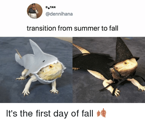 Dank, Fall, and Summer: @dennihana  transition from summer to fall It's the first day of fall 🍂