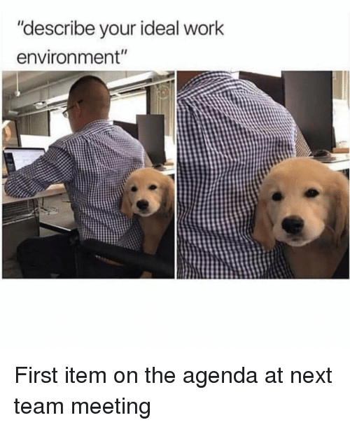 """Work, Girl Memes, and Next: """"describe your ideal work  environment"""" First item on the agenda at next team meeting"""