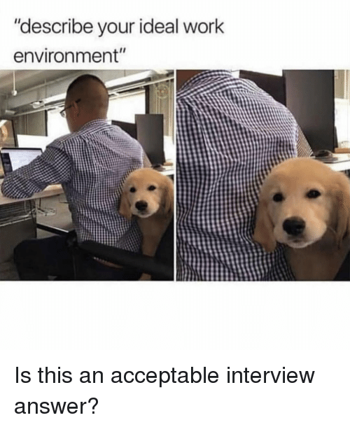 """Work, Girl Memes, and Answer: """"describe your ideal work  environment"""" Is this an acceptable interview answer?"""