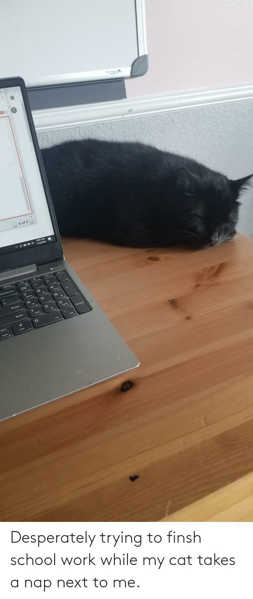 Next To: Desperately trying to finsh school work while my cat takes a nap next to me.