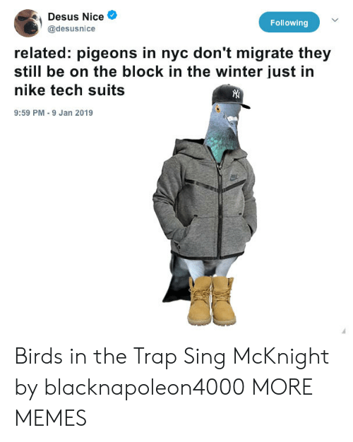 The Trap: Desus Nice  @desusnice  Following  related: pigeons in nyc don't migrate they  still be on the block in the winter just in  nike tech suits  9:59 PM 9 Jan 2019 Birds in the Trap Sing McKnight by blacknapoleon4000 MORE MEMES