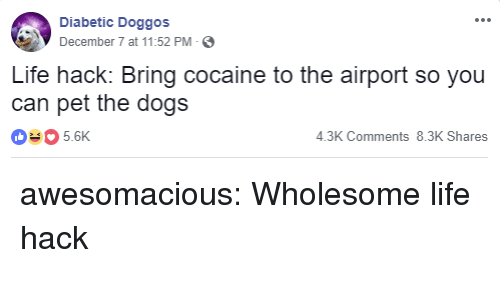 Dogs, Life, and Tumblr: Diabetic Doggos  December 7 at 11:52 PM-  Life hack: Bring cocaine to the airport so you  can pet the dogs  035.6K  4.3K Comments 8.3K Shares awesomacious:  Wholesome life hack