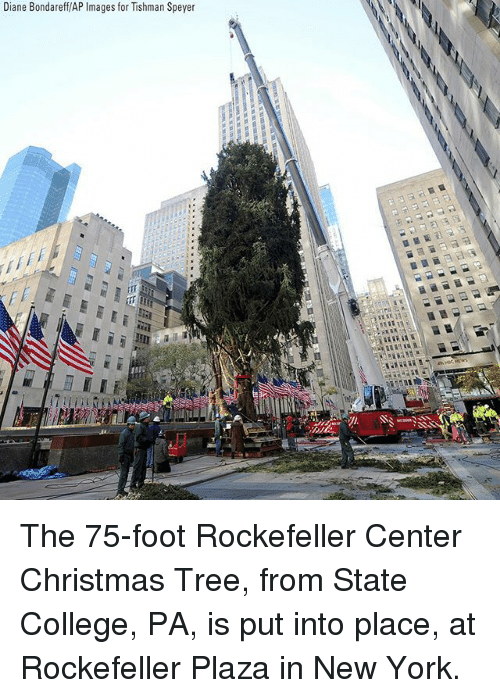 Christmas, College, and Memes: Diane Bondareff/AP Images for Tishman Speyer The 75-foot Rockefeller Center Christmas Tree, from State College, PA, is put into place, at Rockefeller Plaza in New York.