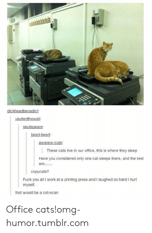 cat scan: dickheadbenadict:  vaultedthewall  skullspeare:  bead-bead:  awwww-cute:  These cats live in our office, this is where they sleep  Have you considered only one cat sleeps there, and the rest  copycats?  Fuck you all I work at a printing press and I laughed so hard I hurt  myself.  that would be a cat-scan Office cats!omg-humor.tumblr.com