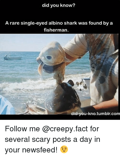 Creepy, Memes, and Tumblr: did you know?  A rare single-eyed albino shark was found by a  fisherman  did-you-kno.tumblr.com Follow me @creepy.fact for several scary posts a day in your newsfeed! 😉
