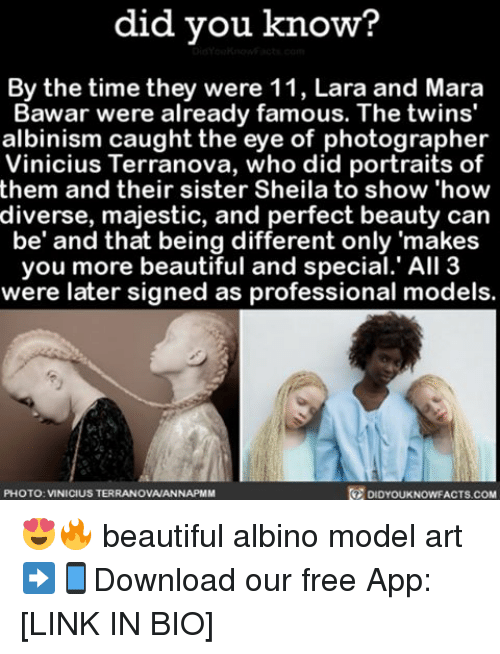 Beautiful, Memes, and Twins: did you know?  By the time they were 11, Lara and Mara  Bawar were already famous. The twins'  albinism caught the eye of photographer  Vinicius Terranova, who did portraits of  them and their sister Sheila to show 'how  diverse, majestic, and perfect beauty can  be' and that being different only 'makes  you more beautiful and special.' All 3  were later signed as professional models.  PHOTO: VINICIUS TERRANOVANANNAPMM  DIDYOUKNOWFACTS COM 😍🔥 beautiful albino model art ➡📱Download our free App: [LINK IN BIO]