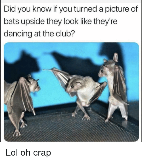 Club, Dancing, and Funny: Did you know if you turned a picture of  bats upside they look like they're  dancing at the club? Lol oh crap