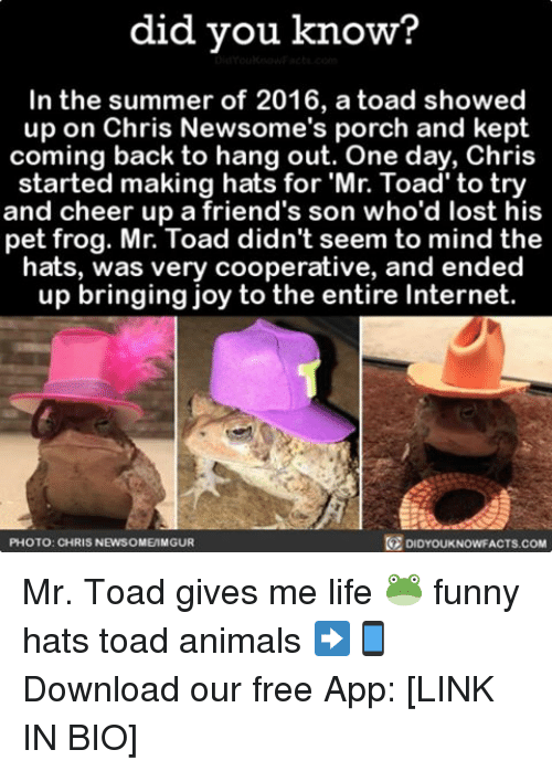 Toade: did you know?  In the summer of 2016, a toad showed  up on Chris Newsome's porch and kept  coming back to hang out. One day, Chris  started making hats for Mr. Toad to try  and cheer up a friend's son who'd lost his  pet frog. Mr. Toad didn't seem to mind the  hats, was very cooperative, and ended  up bringing joy to the entire Internet.  PHOTO: CHRIS NEWSOME MGUR  DIDYOUKNOWFACTS COM Mr. Toad gives me life 🐸 funny hats toad animals ➡📱Download our free App: [LINK IN BIO]