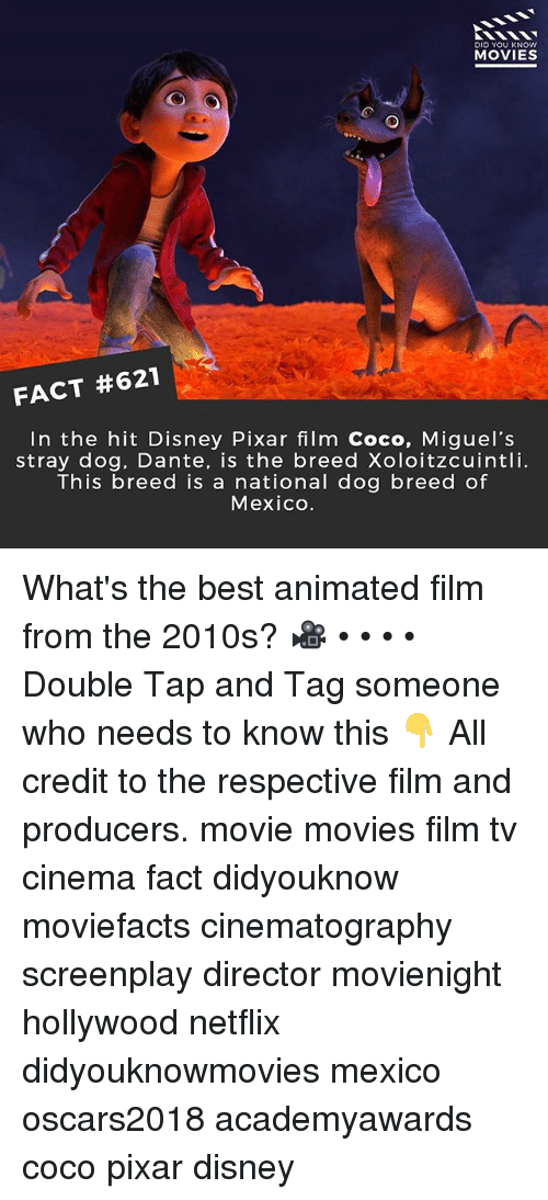 CoCo, Disney, and Memes: DID YOU KNOW  MOVIES  FACT #621  In the hit Disney Pixar film Coco, Miguel's  stray dog, Dante, is the breed Xoloitzcuintli.  This breed is a national dog breed of  Mexico. What's the best animated film from the 2010s? 🎥 • • • • Double Tap and Tag someone who needs to know this 👇 All credit to the respective film and producers. movie movies film tv cinema fact didyouknow moviefacts cinematography screenplay director movienight hollywood netflix didyouknowmovies mexico oscars2018 academyawards coco pixar disney