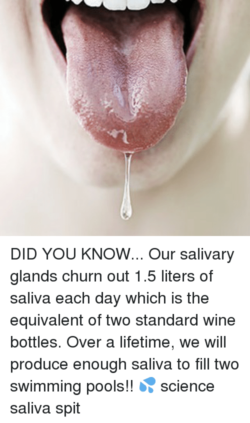 Memes, Wine, and Lifetime: DID YOU KNOW... Our salivary glands churn out 1.5 liters of saliva each day which is the equivalent of two standard wine bottles. Over a lifetime, we will produce enough saliva to fill two swimming pools!! 💦 science saliva spit