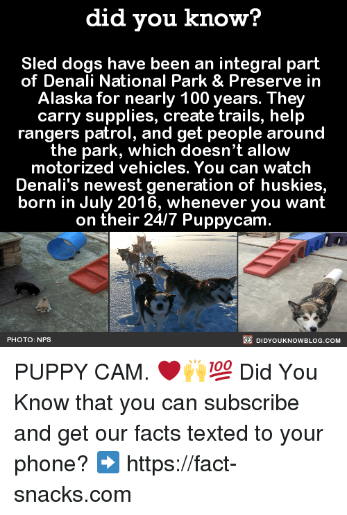 sleds: did you know?  Sled dogs have been an integral part  of Denali National Park & Preserve in  Alaska for nearly 100 years. They  carry supplies, create trails, help  rangers patrol, and get people around  the park, which doesn't allow  motorized vehicles. You can watch  Denali's newest generation of huskies,  born in July 2016, whenever you want  on their 24/7 Puppycam  DIDYOUKNOWBLOG.coM  PHOTO: NPS PUPPY CAM. ❤️🙌💯  Did You Know that you can subscribe and get our facts texted to your phone? ➡ https://fact-snacks.com