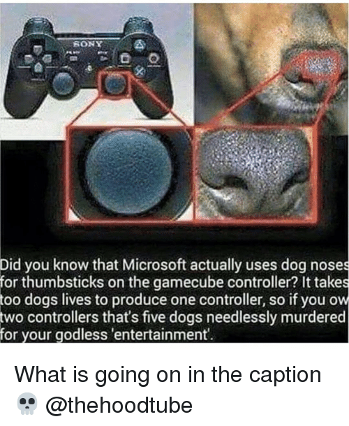 Dogs, Memes, and Microsoft: Did you know that Microsoft actually uses dog noses  for thumbsticks on the gamecube controller? It takes  dogs lives to produce one controller, so if you ow  controllers that's five dogs needlessly murdered  too  two  for your godless 'entertainment What is going on in the caption 💀 @thehoodtube