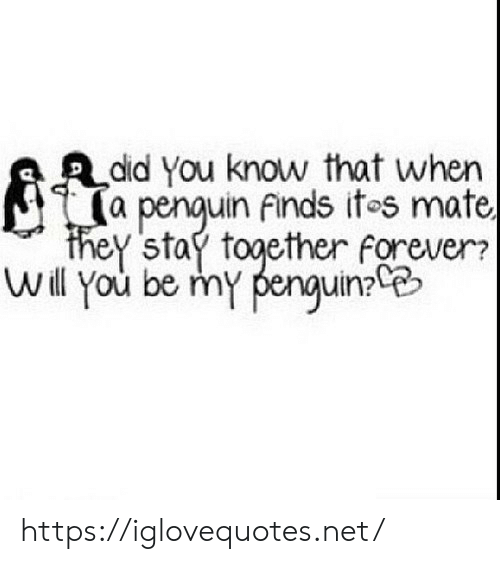 Forever, Penguin, and Net: did You know that when  (a penquin finds ites mate,  they stay together forever?  Will you be my penguin https://iglovequotes.net/
