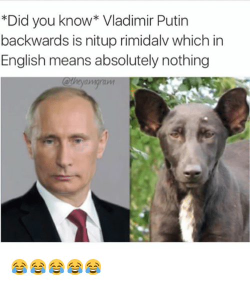 Funny, Vladimir Putin, and Putin: *Did you know* Vladimir Putin  backwards is nitup rimidalv which in  English means absolutely nothing  @theyamgran 😂😂😂😂😂