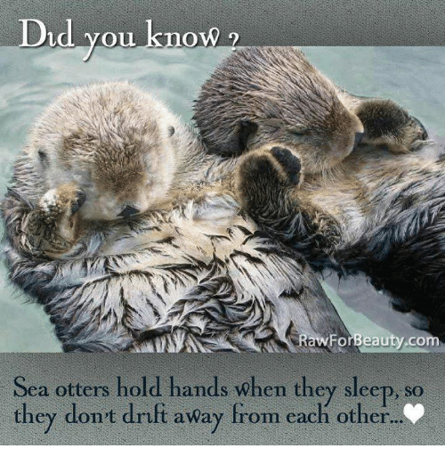 Otters, Sleep, and Com: Did you know2  d yoU knowW  awForBeauty.com  Fo  Sea otters hold hands when they sleep, so  they don't drift away from each other