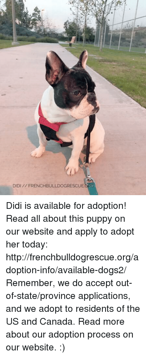 Memes, Canada, and Http: DIDI FRENCHBULLDOGRESCUE Didi is available for adoption! Read all about this puppy on our website <location, likes, dislikes> and apply to adopt her today: http://frenchbulldogrescue.org/adoption-info/available-dogs2/  Remember, we do accept out-of-state/province applications, and we adopt to residents of the US and Canada. Read more about our adoption process on our website. :)