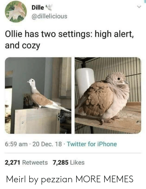 "Dank, Iphone, and Memes: Dille""  @dillelicious  Ollie has two settings: high alert,  and cozy  6:59 am 20 Dec. 18 Twitter for iPhone  2,271 Retweets 7,285 Likes Meirl by pezzian MORE MEMES"