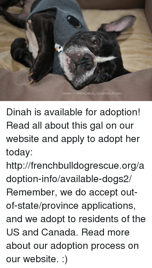 Memes, 🤖, and Application: DINAH ERENCHBULLDOGRESCUE ORG Dinah is available for adoption! Read all about this gal on our website <location, likes, dislikes> and apply to adopt her today: http://frenchbulldogrescue.org/adoption-info/available-dogs2/  Remember, we do accept out-of-state/province applications, and we adopt to residents of the US and Canada. Read more about our adoption process on our website. :)