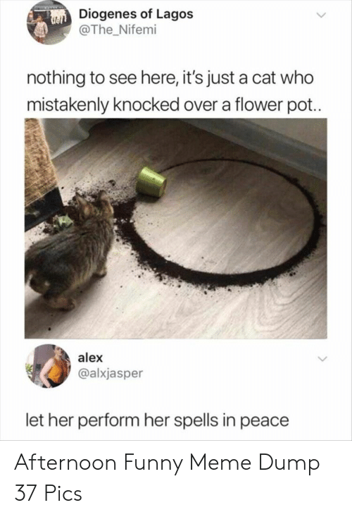 Funny, Meme, and Flower: Diogenes of Lagos  @The Nifemi  nothing to see here, it's just a cat who  mistakenly knocked over a flower pot..  alex  @alxjasper  let her perform her spells in peace Afternoon Funny Meme Dump 37 Pics
