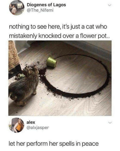 Memes, Flower, and Peace: Diogenes of Lagos  @The Nifemi  nothing to see here, it's just a cat who  mistakenly knocked over a flower pot.  alex  @alxjasper  let her perform her spells in peace
