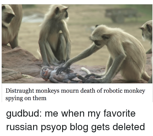 Tumblr, Blog, and Death: Distraught monkeys mourn death of robotic monkey  spying on them gudbud: me when my favorite russian psyop blog gets deleted