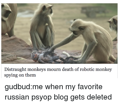 Target, Tumblr, and Blog: Distraught monkeys mourn death of robotic monkey  spying on them gudbud:me when my favorite russian psyop blog gets deleted