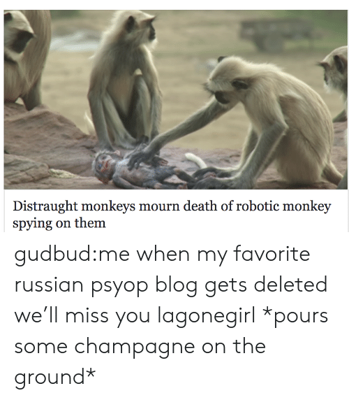 Tumblr, Blog, and Champagne: Distraught monkeys mourn death of robotic monkey  spying on them gudbud:me when my favorite russian psyop blog gets deleted we'll miss you lagonegirl *pours some champagne on the ground*