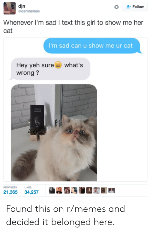 Yeh: djn  daninantais  *  으. Follow  Whenever I'm sad I text this girl to show me her  cat  I'm sad can u show me ur cat  Hey yeh sure  wrong?  what's  RETWEETS LIKES  21,365 34,257 Found this on r/memes and decided it belonged here.