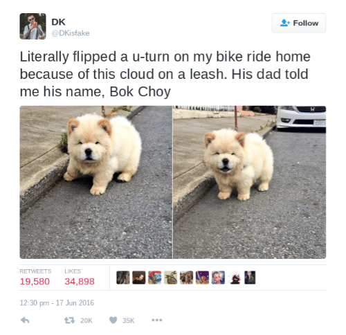 Dad, Cloud, and Home: DK  @DKisfake  Follow  Literally flipped a u-turn on my bike ride home  because of this cloud on a leash. His dad told  me his name, Bok Choy  RETWEETS L  LIKES  19,580 34,898  *I  12:30 pm -17 Jun 2016