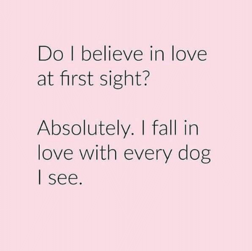 At First Sight: Do I believe in love  at first sight?  Absolutely. I fall in  love with every dog  see.
