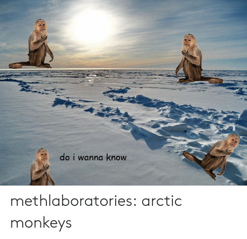 Tumblr, Blog, and Http: do i wanna know methlaboratories:  arctic monkeys