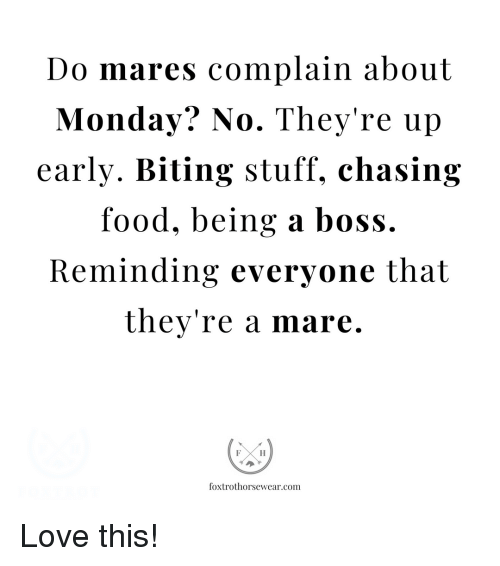 Love, Stuff, and Monday: Do mares complain about  Monday. No. They re up  early. Biting stuff, chasin;g  Tood, being a boss.  Reminding everyone that  they're a mare.  foxtrothorsewear.com Love this!