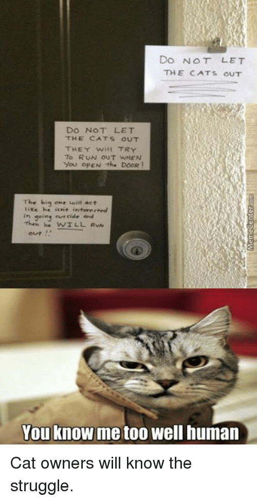 the big one: Do NOT LET  THE CATS OUT  DO NOT LET  THE CATS OUT  THEY will TRY  To RUN OUT WHEN  You OPEN the DOOR!  The big one will act  he ierit inteverved  going eur cide and  then he WILL RUN  You know me too well human Cat owners will know the struggle.