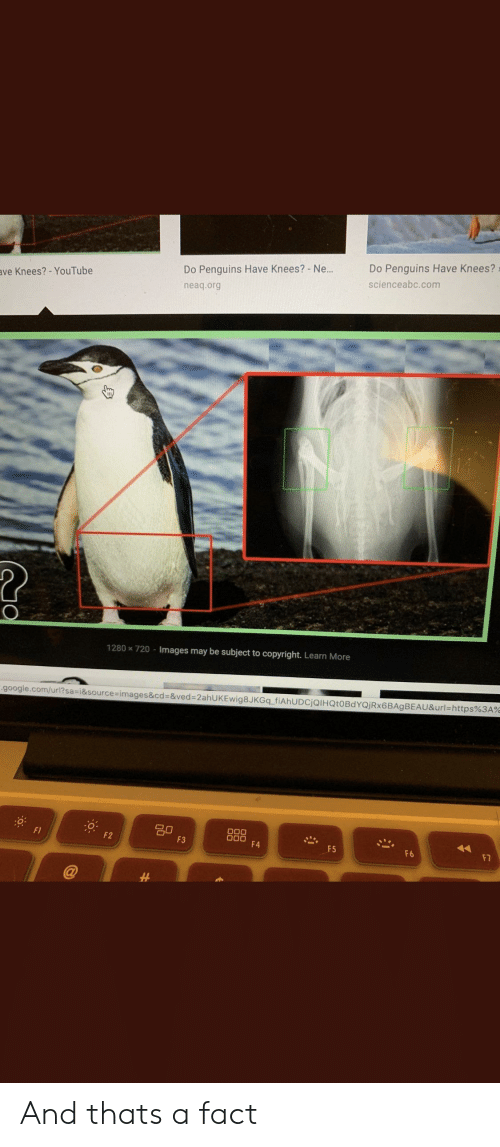 Google, Reddit, and youtube.com: Do Penguins Have Knees?  Do Penguins Have Knees? - N...  ave Knees?-YouTube  scienceabc.com  neaq.org  1280x720-Images may be subject to copyright. Learn More  -google.com/url?sa-i&source-images&cd=&ved=2ahUKEwig8JKGq_fiAhUDCjQIHQt0BdYQjRx6BAgBEAU&url=https%3A%  g0  F3  O00  00  F4  F2  F5  F6  F7 And thats a fact